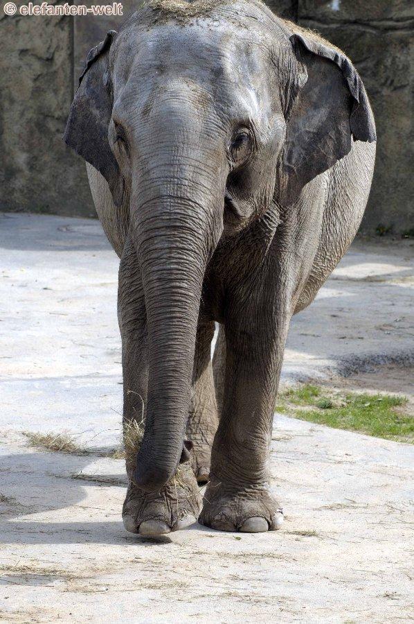 Kölner Elefanten