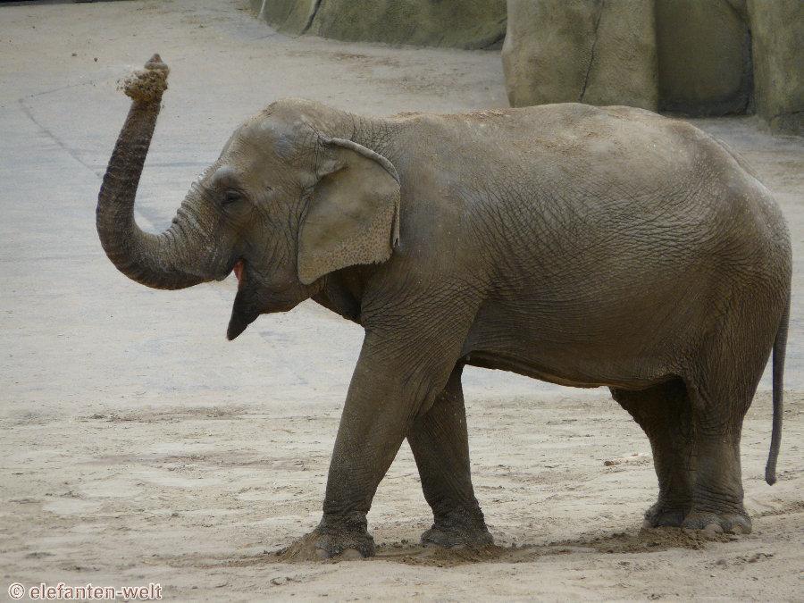 bilder mit elefanten selbst wenn sie wollten elefanten k. Black Bedroom Furniture Sets. Home Design Ideas